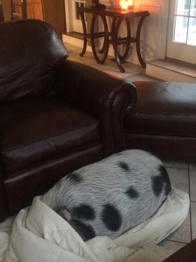 Pig in a Blanket...